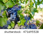 vineyards in chateau  ch   ... | Shutterstock . vector #471695528