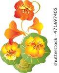 nasturtium flowers | Shutterstock .eps vector #471697403