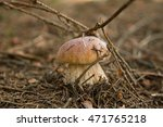 young porcini in the forest | Shutterstock . vector #471765218