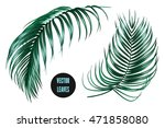 vector tropical palm leaves ... | Shutterstock .eps vector #471858080
