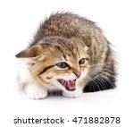 small gray kitten isolated on... | Shutterstock . vector #471882878
