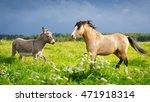 Welsh Pony And Gray Donkey