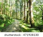 forest in sunny morning   Shutterstock . vector #471928130