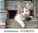 kitten photo | Shutterstock . vector #471982573
