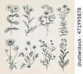 Vintage black and white botany illustration