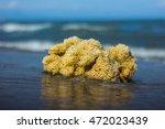 Big Yellow Sea Sponge Ashore.
