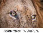 close up of lion eyes in the... | Shutterstock . vector #472030276