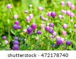 globe amaranth or flower in the ... | Shutterstock . vector #472178740