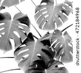 monochrome philodendron leaves... | Shutterstock .eps vector #472184968