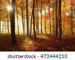 autumn  forest of deciduous... | Shutterstock . vector #472444210