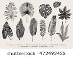 set leaf. exotics. vintage... | Shutterstock .eps vector #472492423