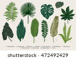 set leaf. exotics. vintage... | Shutterstock .eps vector #472492429