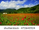 Poppies Field In Tuscany ...