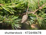 One Lonely Pinecone In The...