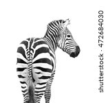 Zebra Looking Back Shoot From...