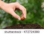 woman hand seeding hazelnut in... | Shutterstock . vector #472724380