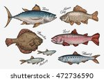 Stock vector seafood collection of fish such as tuna trout carp flounder anchovy herring vector 472736590