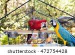 Parrots Aviary. Macaws