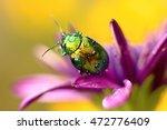 colored beetle  linaeidea aenea ... | Shutterstock . vector #472776409