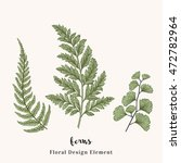 set with ferns. plants with... | Shutterstock .eps vector #472782964