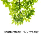 green leaf isolated on white... | Shutterstock . vector #472796509