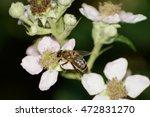 honeybee | Shutterstock . vector #472831270