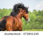 vladimir heavy draft horse... | Shutterstock . vector #472841140