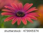 august | Shutterstock . vector #473045374