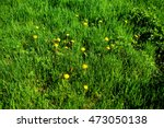 Yellow Dandelion And Grass On ...