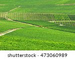 beautiful view of the vineyards ... | Shutterstock . vector #473060989