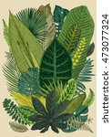 Vector vintage composition. Exotic leaves. Botanical classic illustration. | Shutterstock vector #473077324