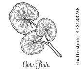 gotu kola plant. black isolated ... | Shutterstock .eps vector #473133268