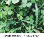 Fresh Green Clover And Grass...