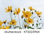 floral background. flowers of... | Shutterstock . vector #473223964