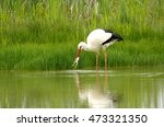 stork fishing | Shutterstock . vector #473321350