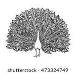 Beautiful Hand Drawn Peacock...