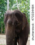 Small photo of Front of Elephant head close up , focus on elephant heaf whit blurry background, at chiang mai , Thailand.