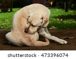 scratching himself dog outside... | Shutterstock . vector #473396074