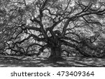 Old Forest In Black And White ...