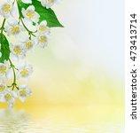 white jasmine. the branch... | Shutterstock . vector #473413714