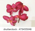 red flowers | Shutterstock . vector #473455048