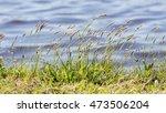 Prairie Grass Waterside  Grass...