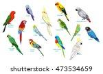 big set parrots vector... | Shutterstock .eps vector #473534659