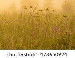 nature beautiful background...   Shutterstock . vector #473650924