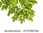 tree leaf on white background | Shutterstock . vector #473700766