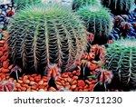 cactus in desert.domestic... | Shutterstock . vector #473711230