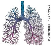 human lungs. respiratory system.... | Shutterstock .eps vector #473779828