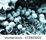 mushrooms | Shutterstock . vector #473803003