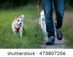 Stock photo walking with dogs 473807206