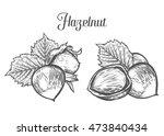 hazelnut nut seed vector.... | Shutterstock .eps vector #473840434